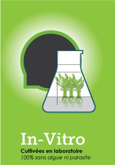 Gamme de plantes pour aquarium In Vitro - plantes de laboratoire garanties sans algues ni parasites (escargots par exemple)