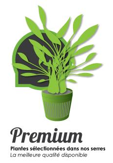 Gamme de plantes pour aquarium premium - plantes sélectionnées dans nos serres. La meilleure qualité disponible