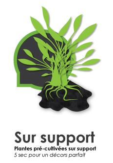 Gamme de plantes d'aquarium sur support - plantes pré-cultivées sur roche ou sur bois.  5 secondes pour un décors parfait