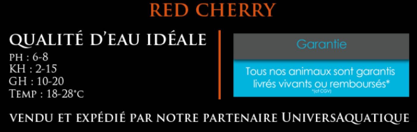 UniversAquatique distributeur exclusif, vendu et expédié par notre partenaire UniversAquatique, qualité d'eau idéale, ph : 6-7,5 KH : 2-12 GH : 10-15 Temp : 20-28°c, crevette red cherry