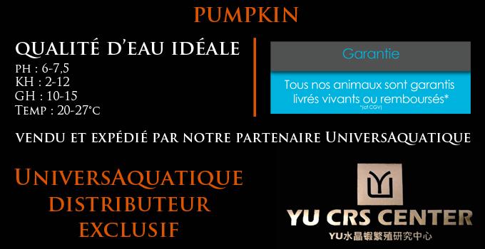 UniversAquatique distributeur exclusif, vendu et expédié par notre partenaire UniversAquatique, qualité d'eau idéale, ph : 6-7,5 KH : 2-12 GH : 10-15 Temp : 20-28°c, crevette pumpkin select, yu ces center