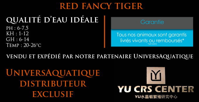 UniversAquatique distributeur exclusif, vendu et expédié par notre partenaire UniversAquatique, qualité d'eau idéale, ph : 6-7,5 KH : 2-12 GH : 10-15 Temp : 20-28°c, red fancy tiger, yu ces center