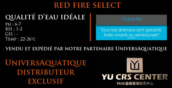 UniversAquatique distributeur exclusif, vendu et expédié par notre partenaire UniversAquatique, qualité d'eau idéale, ph : 6-7,5 KH : 2-12 GH : 10-15 Temp : 20-28°c, crevette red fire select, yu ces center