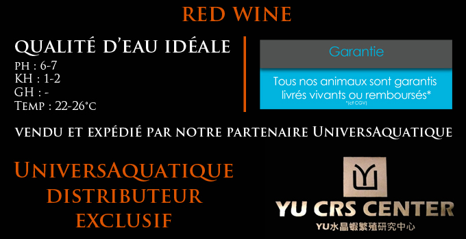 UniversAquatique distributeur exclusif, vendu et expédié par notre partenaire UniversAquatique, qualité d'eau idéale, ph : 6-7,5 KH : 2-12 GH : 10-15 Temp : 20-28°c, red wine, yu ces center