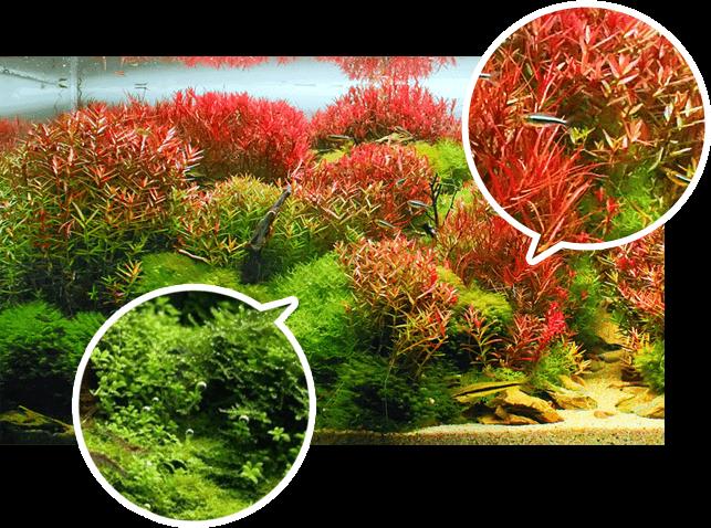Le superbe rendu sur la couleur des plantes
