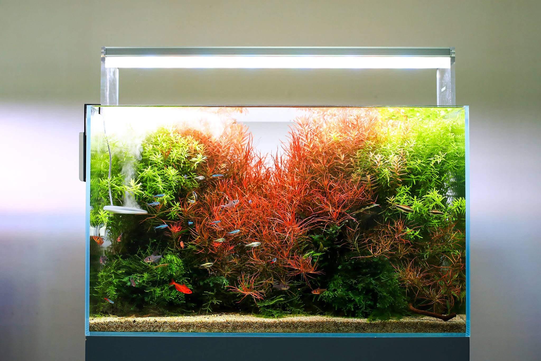 Line Led Standard Aquaplante Twinstar 300e E MGVUzpqjLS